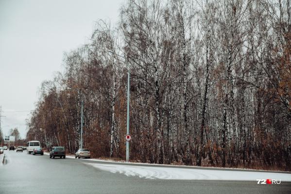 Из-за строительства съездов для развязки деревья вырубят