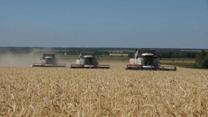 Зауральские аграрии подсчитывают убытки, нанесенные засухой