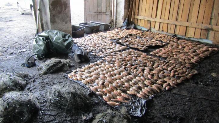В Зауралье рыбаку грозит тюрьма за вылов сетями тысячи карасей