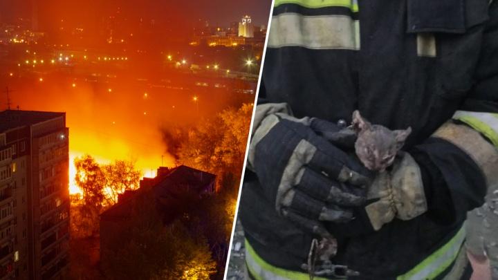 В Екатеринбурге сгорели тандырная и частные дома: пожарный вынес из огня маленького котенка