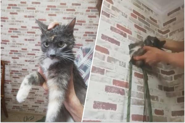 Кошку доставали из шахты несколько часов
