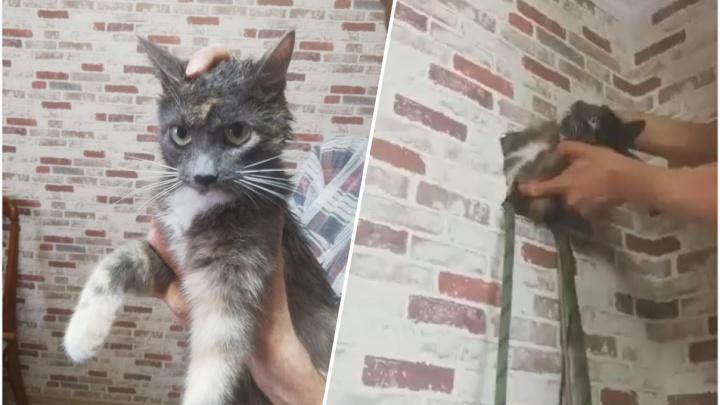В Екатеринбурге кошка залезла в дырку в стене квартиры и пропала. Ее спасали несколько часов