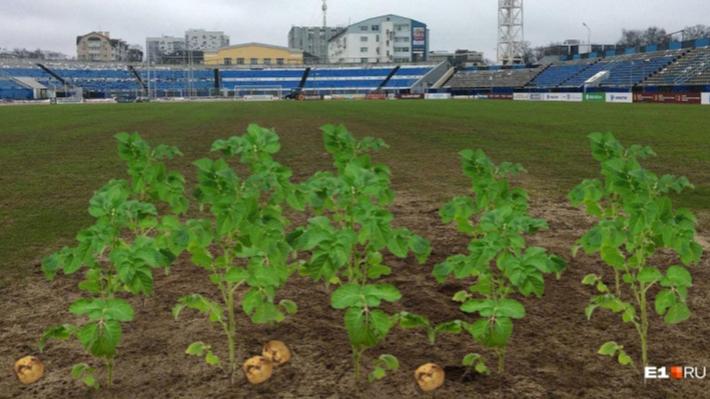 Президент «Урала» о поле стадиона «Шинник»: «Даже не огород, а хуже!». Реакция властей