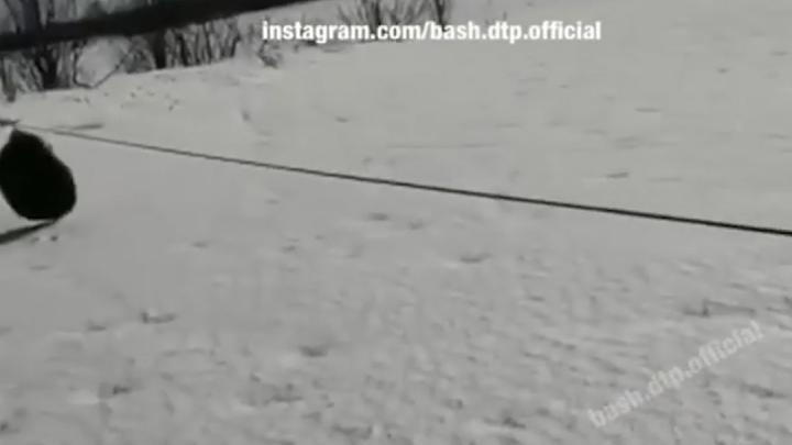 «Чуть шею не срезал»: в парке отдыха в Башкирии туристы налетели на металлический трос