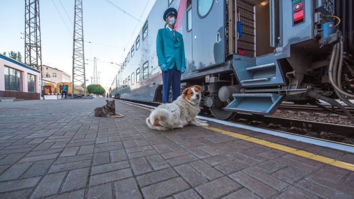Стало известно, сколько будет стоить билет на скорый поезд из Крыма в Омск
