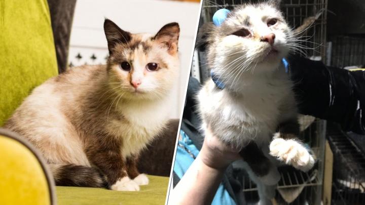«Все животные истощены и инфицированы»: волонтеры забрали 17 кошек с передержки в Верхней Пышме