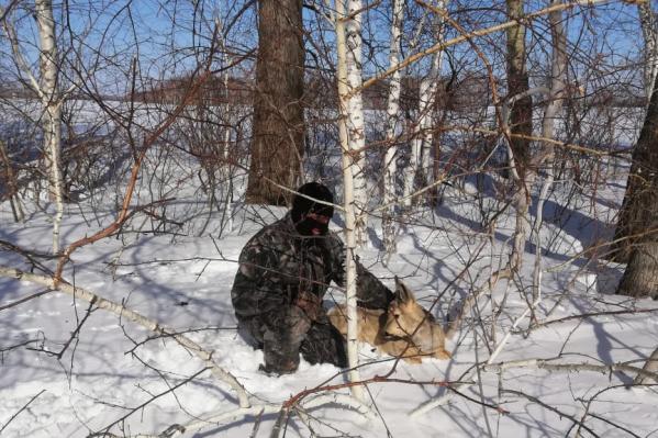 Живые косули в Краснозёрском районе подпускают к себе людей