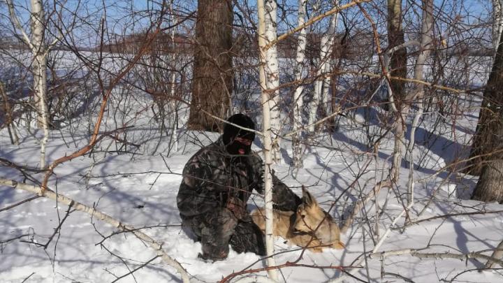 «Тут они жили, а тут — подохли»: новосибирец наткнулся на туши мёртвых косуль в лесу Краснозёрки
