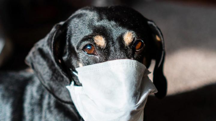 Омич хотел купить медицинские маски и лишился 5 тысяч рублей