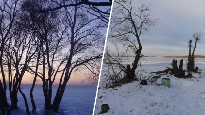 «Варвары, вандалы»: на берегу Шарташского лесопарка вырубили красивые деревья