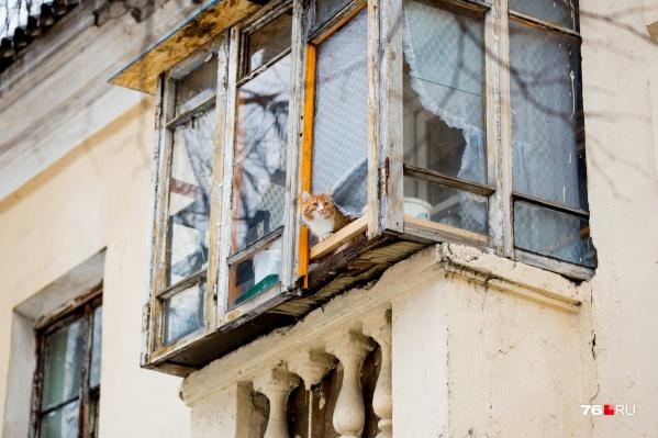 Даже котик не спасет вас от штрафа за нарушения