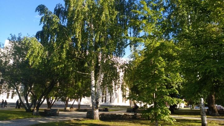 «Вероятность холодов минимальна»: Илья Винштейн сделал прогноз на лето в Зауралье