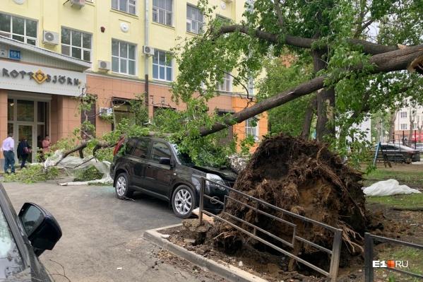 Деревья падали на машины, дома и линии электропередачи
