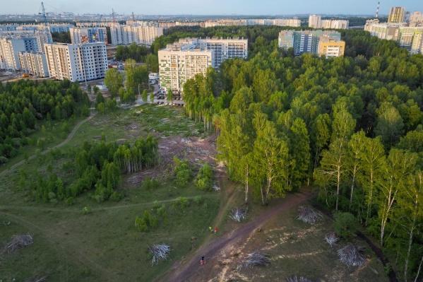 Деревья вырубили в районе домов № 26, 36 на улице Александра Шмакова