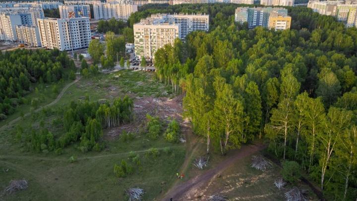 После вырубки деревьев в «Парковом» возбудили уголовное дело. Ущерб оценили более чем в полмиллиона