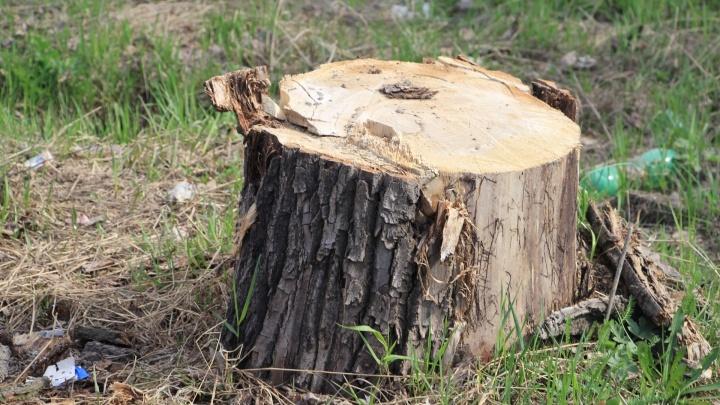 Двух жителей Архангельской области осудили за рубку дров в нацпарке «Онежское Поморье»