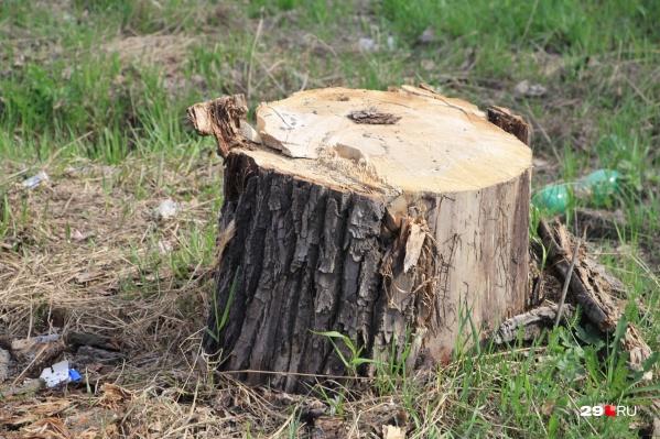 За незаконную вырубку деревьев с одного из мужчин в пользу государства взыскали снегоход и автомобиль