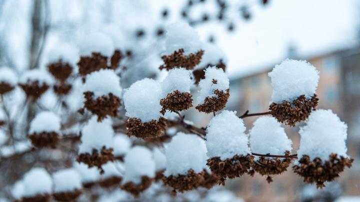 Какой будет последняя неделя ноября? Изучаем прогноз погоды в Кузбассе