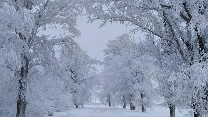 Север Ростовской области занесло снегом
