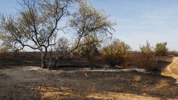 Ветер усугубляет ситуацию: Волгоградской области угрожает чрезвычайная пожароопасность
