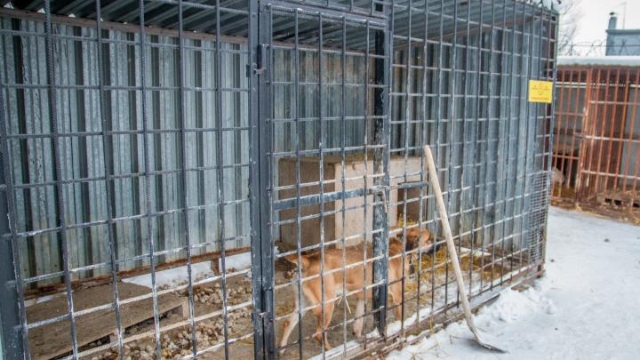 В Самарской области планируют поймать почти 50 тысяч бездомных животных