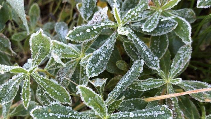 На юге Красноярского края выпал первый снег