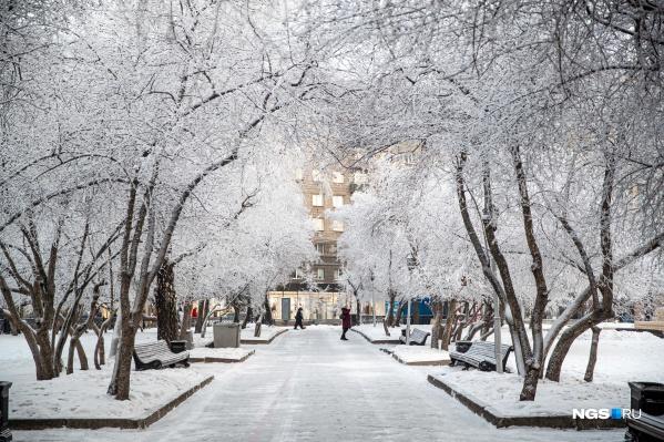 Аллеи Новосибирска стали белоснежными