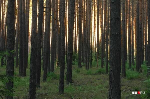 Женщина ушла в лес одна