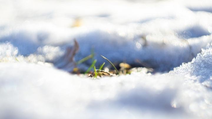 Восемь признаков весны, которые вы не увидите на самоизоляции