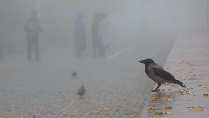 Вместо морозов и снега — оттепель с дождем: рассказываем, какой погодой Волгоград проводит осень