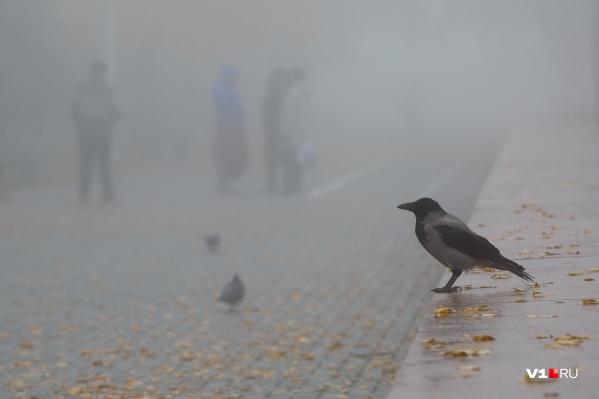 В ближайшие дни Волгоград накроет туманным облаком