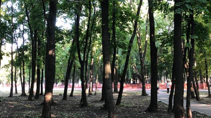 Городские власти назвали причину строительства в парке Гагарина