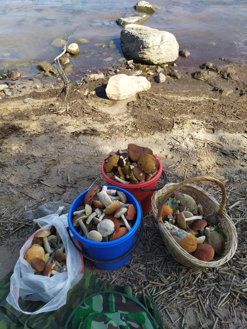 В 17 километрах от Ярославля люди нашли 28 белых грибов