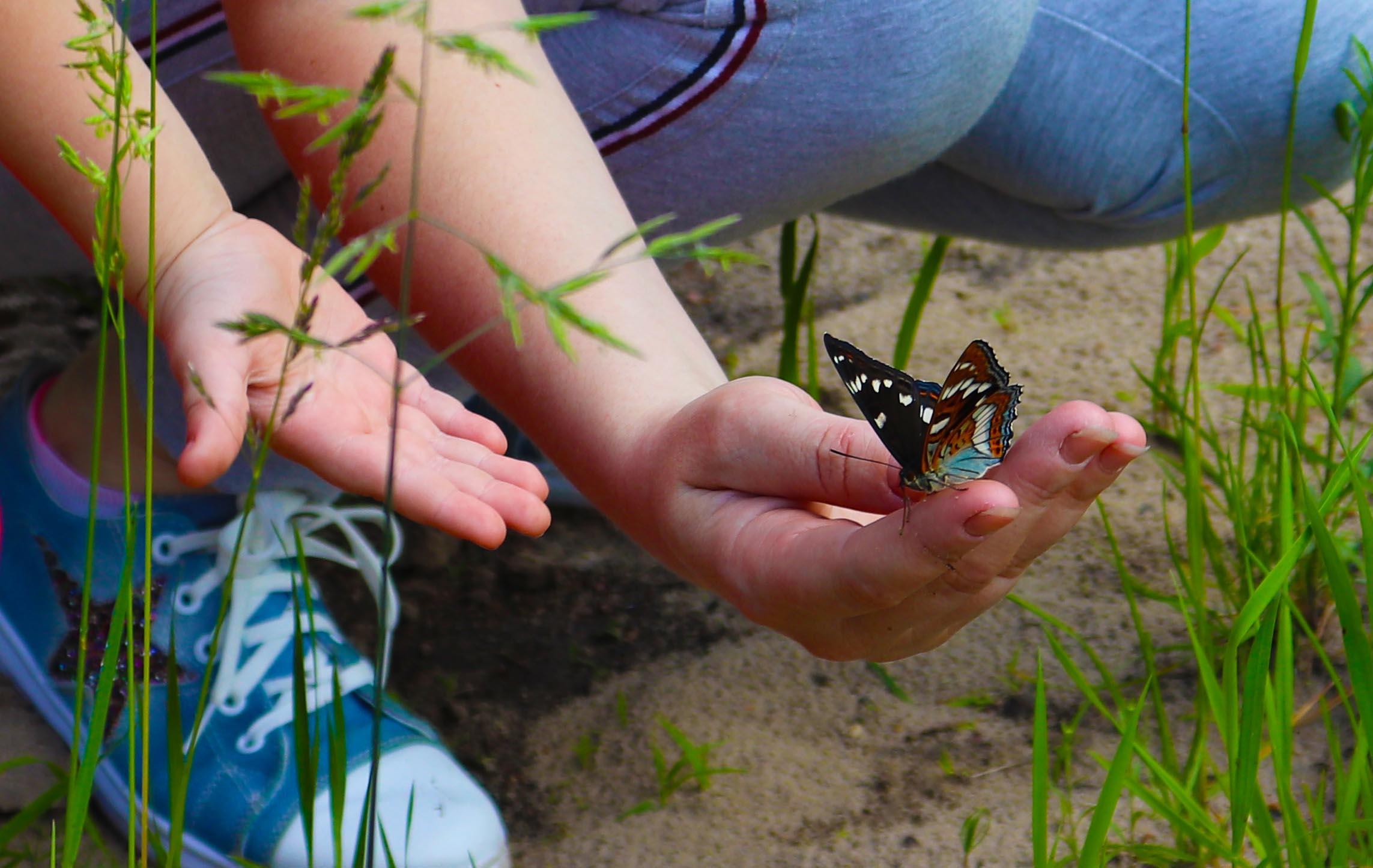 Некоторые бабочки даже доверчиво садились на руку