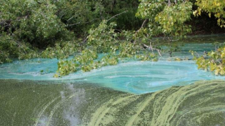 Рыбаки обнаружили в реке Чулым вещество ярко-бирюзового цвета
