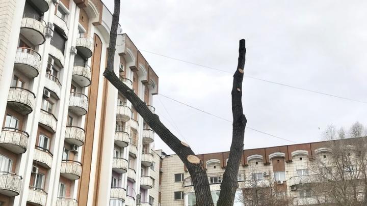 «Самара поражена страшным кронавирусом!»: блогер Варламов — о санитарной обрезке деревьев