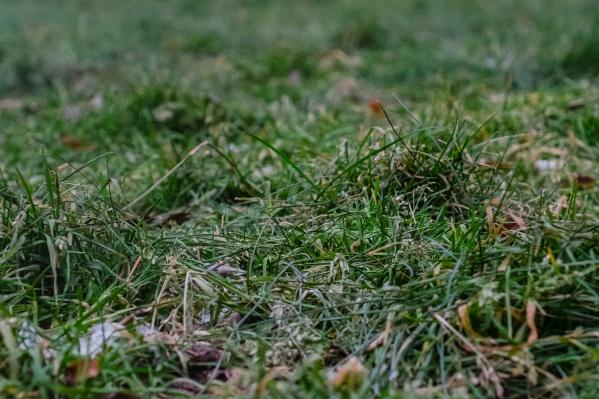 Заморозки возможны как на почве, так и в воздухе