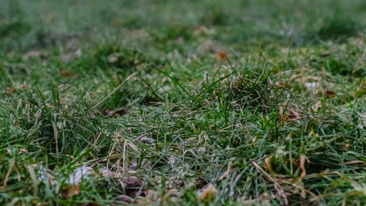 МЧС продлило предупреждение о заморозках в Прикамье