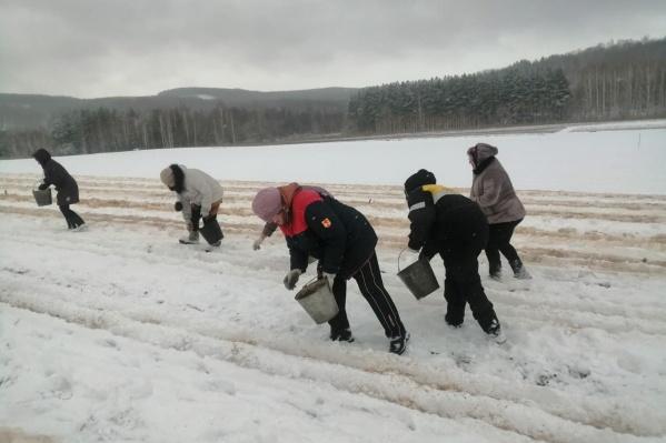 """Для посева нужен постоянный снежный покров в <nobr class=""""_"""">3–4 сантиметра</nobr>"""