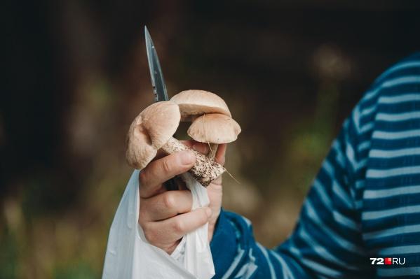 Обращайте внимание на то, что происходит вокруг, чтобы не заблудиться, собирая грибы