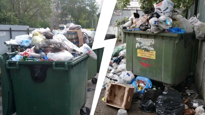 «Скоро крысы начнут играть с детьми»: во дворах Челябинска начался новый мусорный коллапс