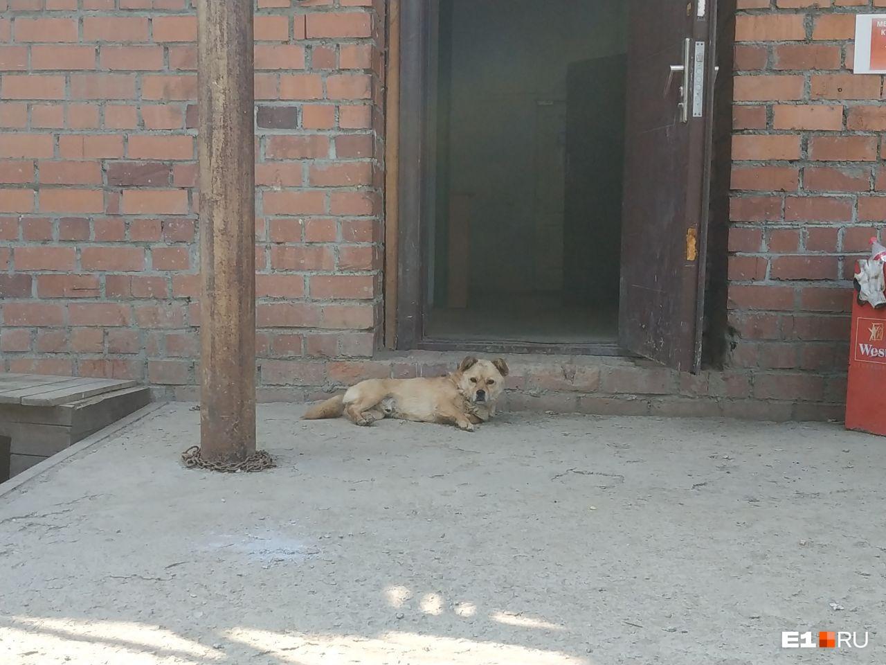 Но общаться с журналистами в этом здании не захотела даже собака