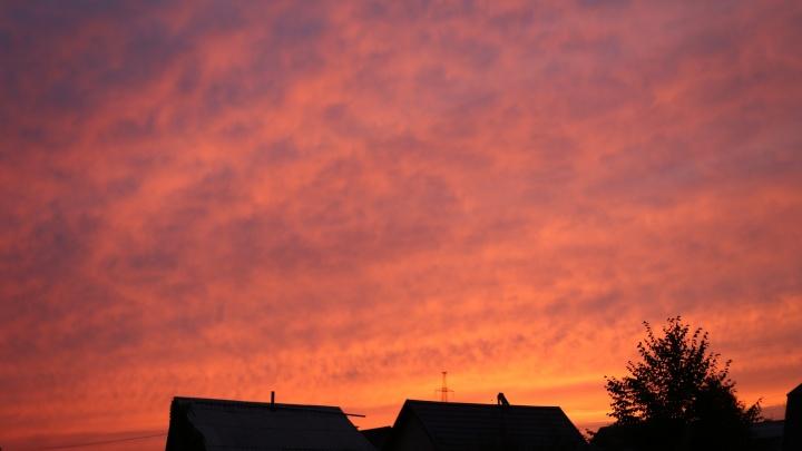 От розового до багрового: новосибирцы восхитились красивейшим разноцветным закатом