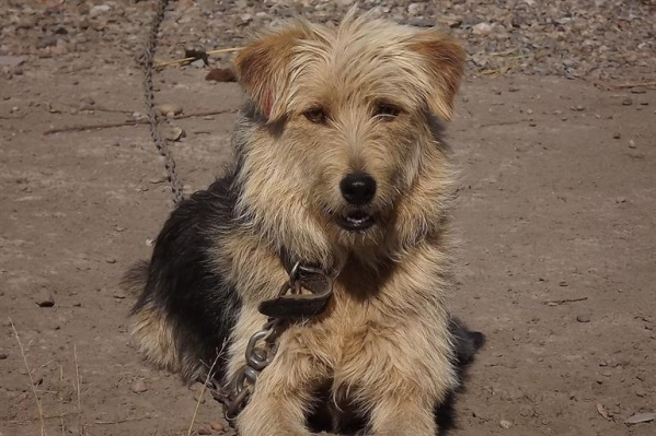 150 собак обрели семью благодаря волонтерам