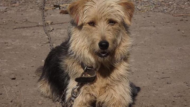 «Они становятся домашними любимцами»: красноярцы забрали из муниципального приюта 150 собак