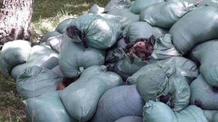 На Южном обходе выбросили более тонны останков животных