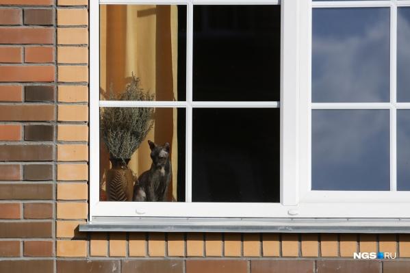 За 5 лет под Новосибирском обжили уже целый малоэтажный городок