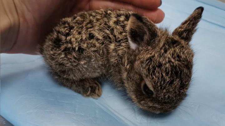 Синичка, ушастый ёж и мини-пиг: новорождённые зверята, которые легко поместятся на ладони