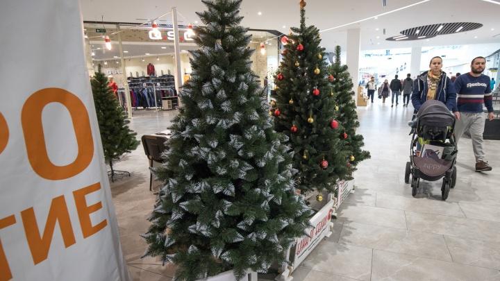 «Растереть иголки в руках»: как правильно выбрать елку в Ростове?