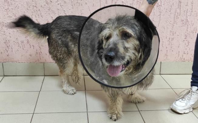 «Кровавые слезы из глаз»: в центре реабилитации выхаживают пса из Цыганского поселка